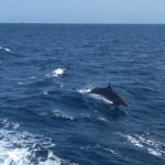 delfiny!